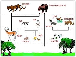 animals of temperate forest