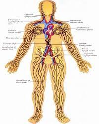 lymphatic drain