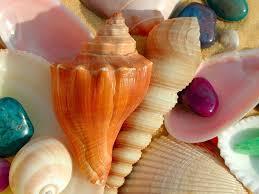 seashell wallpapers