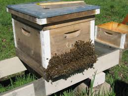 bees home