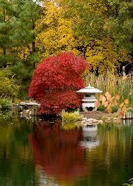 japaneses maple