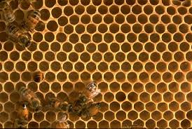 beehive picture