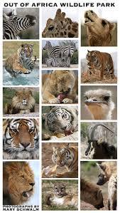 africa wildlife pictures