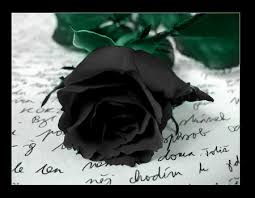 black rose flowers