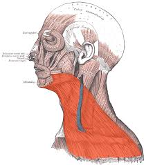 muscle platysma