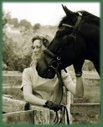 horse affection