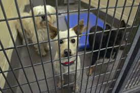 animals shelters