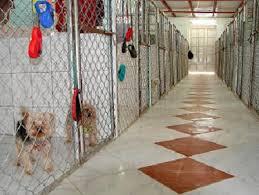 inside dog kennels