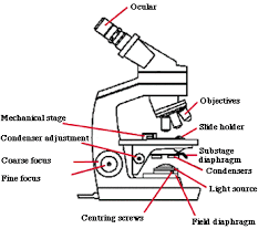 brightfield microscopy