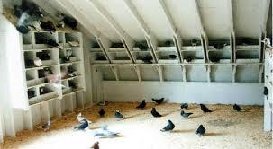 pigeon coops