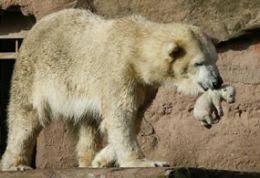 bear mommy