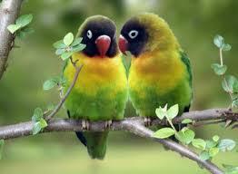 pajaritos del amor