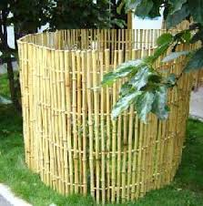 bamboo ornamental
