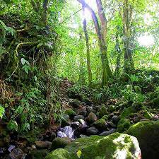 central american rainforest