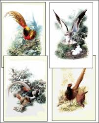 drawings of birds flying