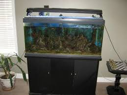 100 gallons fish tank