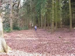 coniferous forest landforms