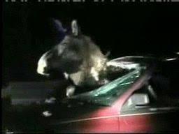 moose cars