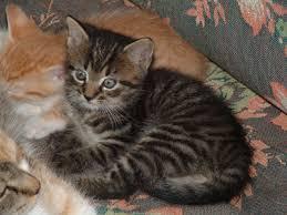 cat and kitten photos