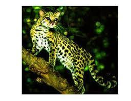 rainforest animal pics