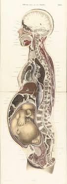 biomedical illustration