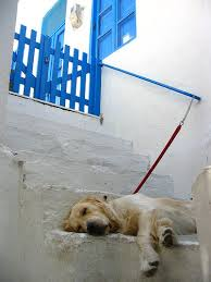 greece dog