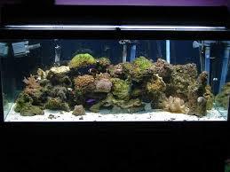75 gallon fish aquariums