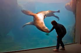 pictures of sealife