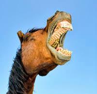 float horse teeth