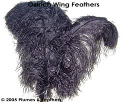 ostrich wings