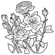 coloring pictures of roses