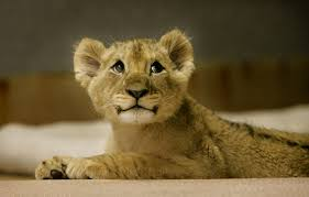 animated lion cub