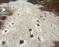 dinosaurs tracks