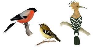 fauna birds