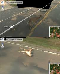 google street view deer