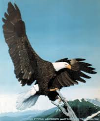 free eagle pictures