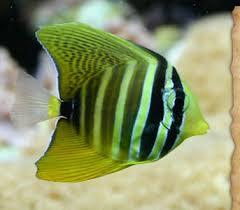 animals fish