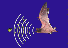sonar bats