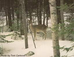 deers habitats