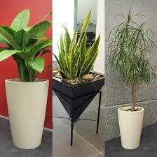 indoor floor plant