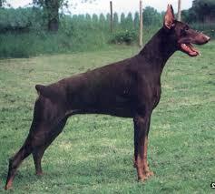 marcas de perros