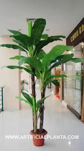 banana tree photos