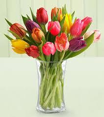 flowers tulip