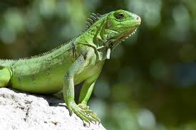 reptile photos