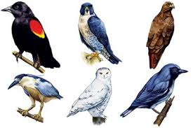 how to paint birds