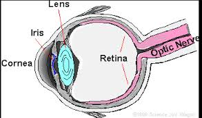 labeled parts of the eye