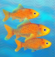 image of fishes