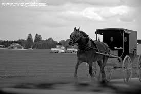amish horse carriage