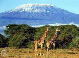 mount kilimanjaro images