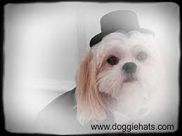 dog birthday hats